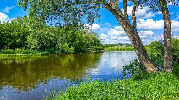 River, Nature, Creek, Greens, Willow, Tree, Grass, Sky