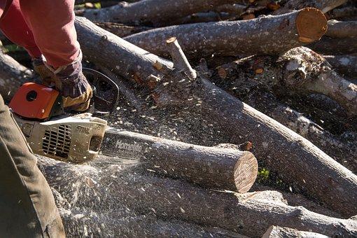 Chainsaw, Saw, Tool, Power, Cutting, Tree, Branch