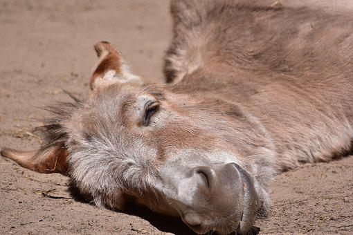 Donkey, Concerns, Tired, Beast Of Burden, Animal, Funny