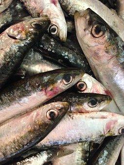 Fish, Sardines, Seafood, Healthy, Fishing