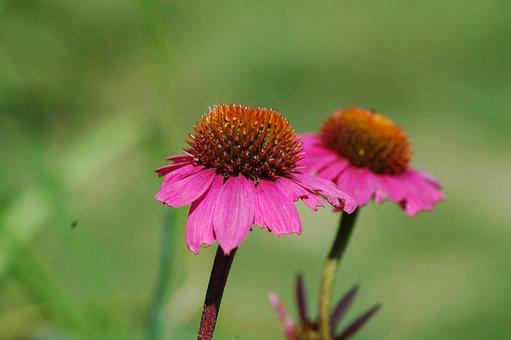 Nature, Flower, Flora, Summer, Closeup, Outdoors, Leaf