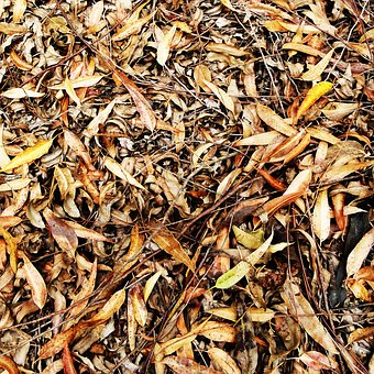 Texture, Foliage, Leaves, Dried, Autumn, Vegetable