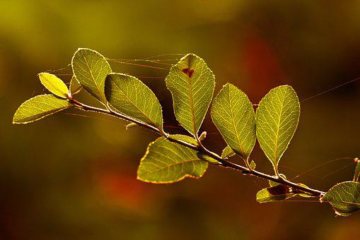 Branch, Leaves, Foliage, Tree, Nature, Vibrant