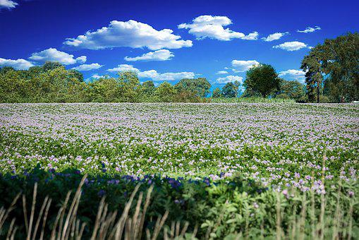 Flowers, Meadow, Flower Meadow, Nature, Spring, Plant