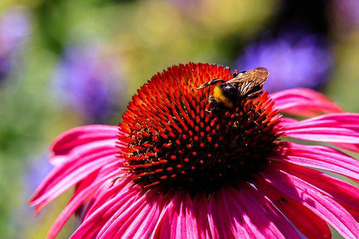Flower, Blossom, Bloom, Nature, Garden, Flower Garden