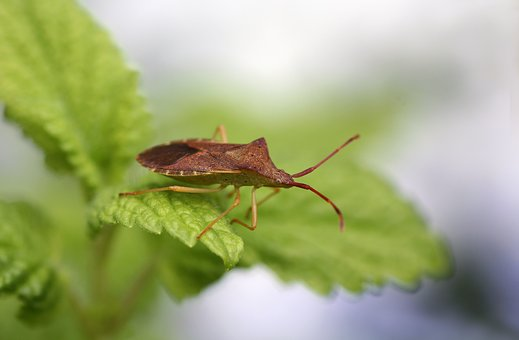 Bug, Beetle, Nature, Close Up, Insect, Macro, Green