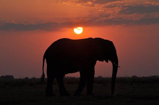 Elephant, Sunset, Nature, Mammal, Sky, Landscape