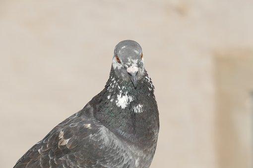 Nature, Wildlife, Bird, Animal, Outdoors, Winter