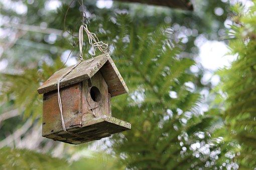 Wooden, Bird House, Nest, Home, Garden, Trees, Wire