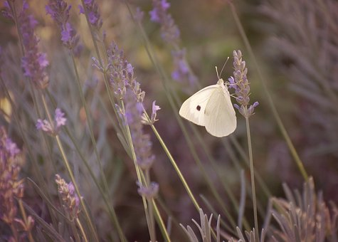 Butterfly, Nature, Flower, Summer, Blossom, Outdoor