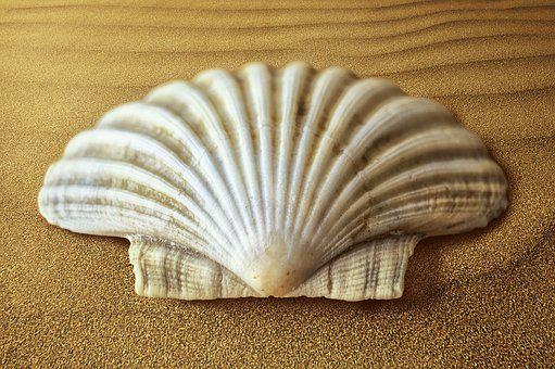Shell, Oyster, Molluscum, Sand, Seafood, Summer