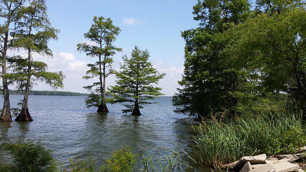 Lake, Trees, Serene, Calm, Peaceful, Lake Washington Ms