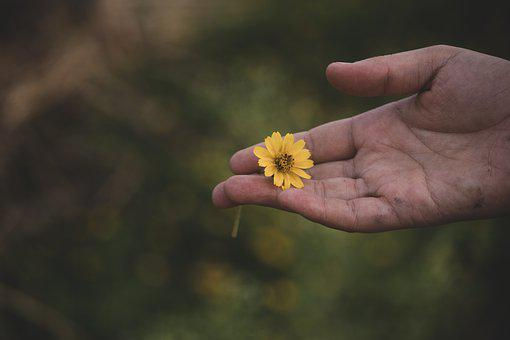 Flower, Hand, Nature, Lifestyle, Minimal, Floral, Relax