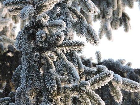 Winter, Fir, Christmas, Snow, Wintry, Cold, Snowy