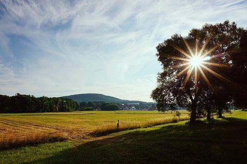 Sun, Morning Light, Sun Behind The Tree, Sunrise