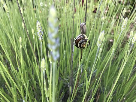Nature, Snail, Tiny, Outdoors, Green, Wet