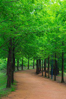 Forest, Forest Road, Nature, Wood, Gil, Break, Pause