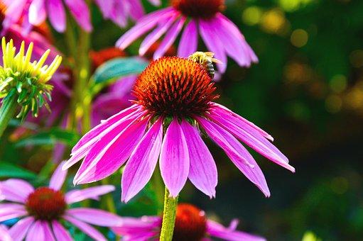 Flower, Violet, Heart Orange, Bee, Nature, Biodiversity