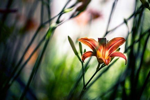 Nature, Flower, Color, Bloom, Petals, Garden