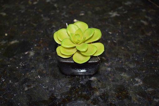 Flower, Plant, Artificial, Botanist, Floral, Nature
