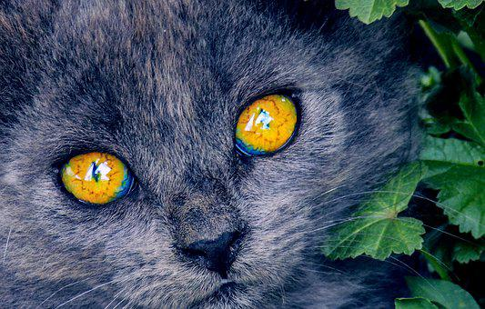 Bright Eyes, Kitten, Cat, Eyes, Animals, Head, Views
