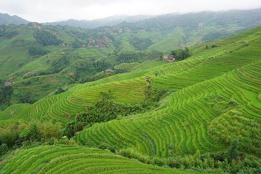 Longsheng, China, Terraces, Vegetation, Green