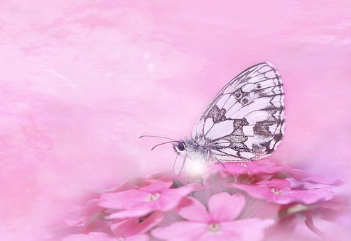 Butterfly, Insect, Close Up, Animal, Flower, Summer