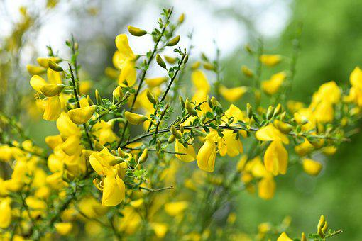 Blooms, Bush, Spring, Flower, Garden, Nature, Plant