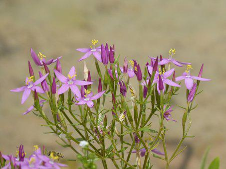 Flowers, Wild Flowers, Corsage, Pink Flowers