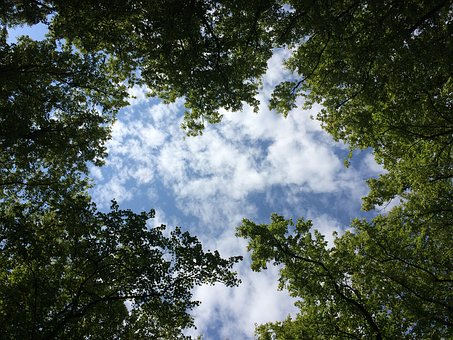 Forest Glade, Forest, Sky, Glade, Green, Light, Clouds
