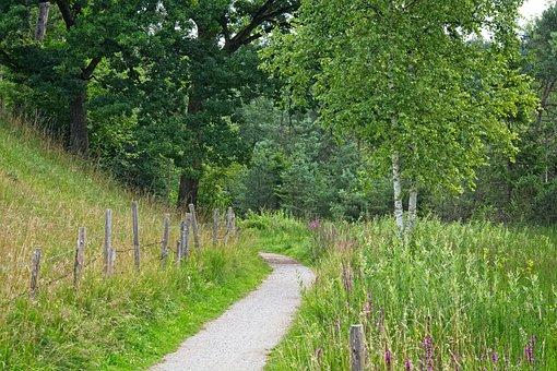 Trail, Nature Trail, Away, Nature, Trees, Hiking, Lane