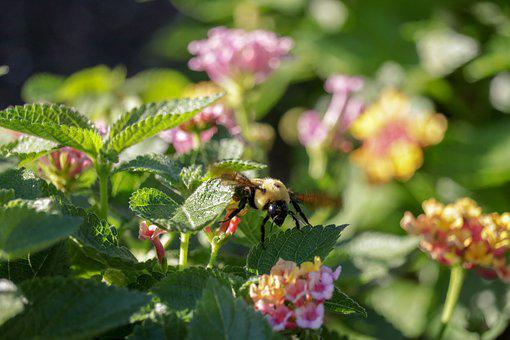 Flowers, Bee, Leaves, Pink, Insect