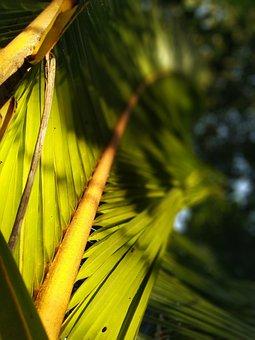 Leaf, Green, Nature