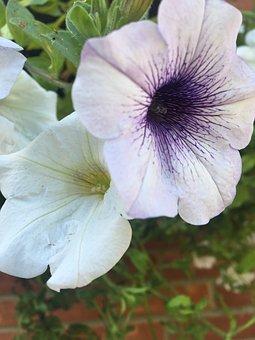 White, Leaves, Green, Purple, Brick, Wall, Petals