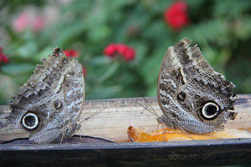 Butterflies, Nature, Fauna, Wings, Spring