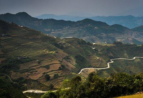 Vietnam, Northern Circuit, Rice, Rice Paddies, Harvest