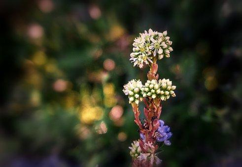 Flowers, Nature, Flora, Petals, Plant, Garden, Summer