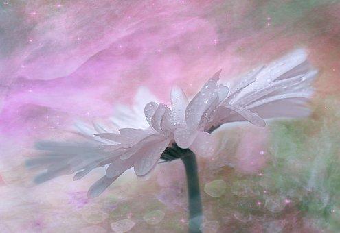 Gerbera, Flower, Pink, Blossom, Bloom, Plant, Romantic