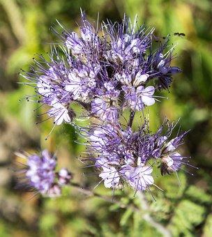 Pointed Flower, Plant, Flower, Summer, Purple