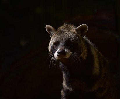 Civets, Predator, Forest, Hair, Shadow, Carnivores