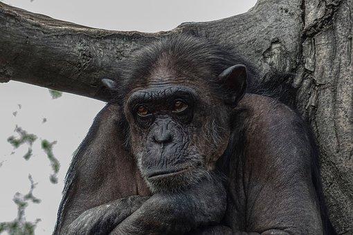 Zoo, Monkey, Primqate, Animal World, Animal, Mammal