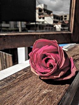 Rosa, Vintage, Rose, Roses, Flowers, Flower