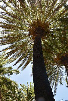Palm, Summer, Holiday, Sun, Travel, Crete, Greece