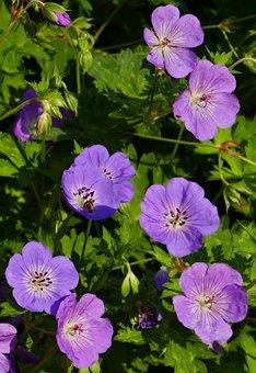 Nature, Garden, Hedge, Flowers, Violet, Sun, Light