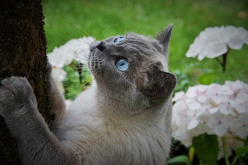 Cat, Pet, Blue Eyes, Fur, Furry, Whiskers, Garden, Tree