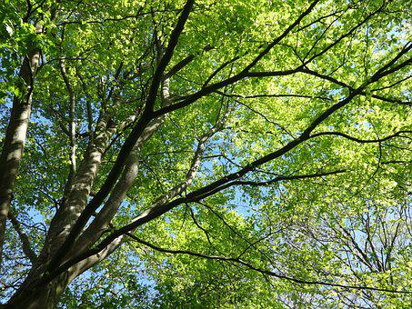 Green, Tree, Nature, Forest, Outdoors, Sky, Leaves
