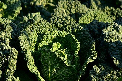 Savoy Cabbage, Kohl, Vegetables, Savoy, Healthy, Food