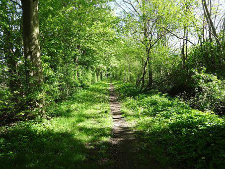 Path, Landscape, Walk, Green, Trees, Leaves, Forest