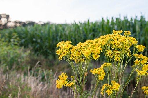 Flowers, Yellow, Berm, Flower, Bloom, Garden, Petals