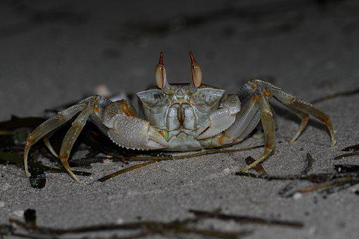 Crab, Sea, Sea Animals, Nature, Animal, Beach
